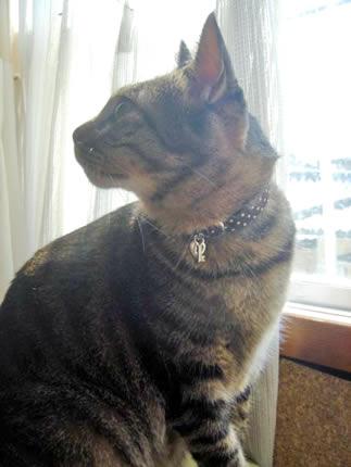 猫 首輪 かわいい