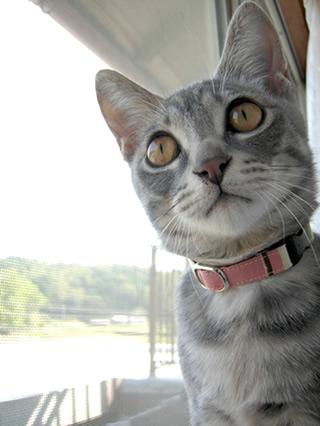 猫 首輪 おしゃれ