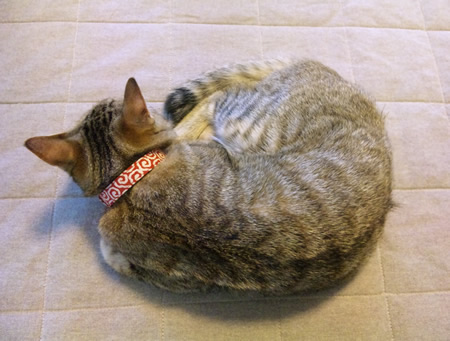 猫 首輪 和柄