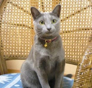 猫首輪 安全