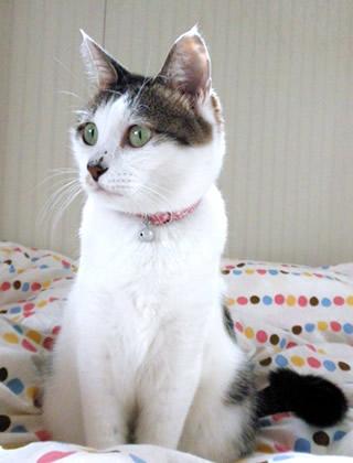 猫 首輪 花柄