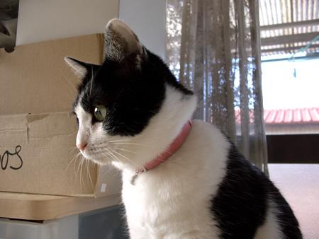 猫 首輪 安全