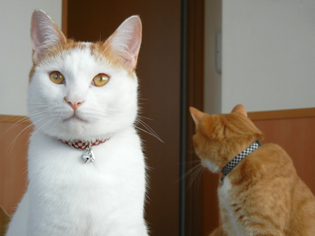 猫 首輪 和風