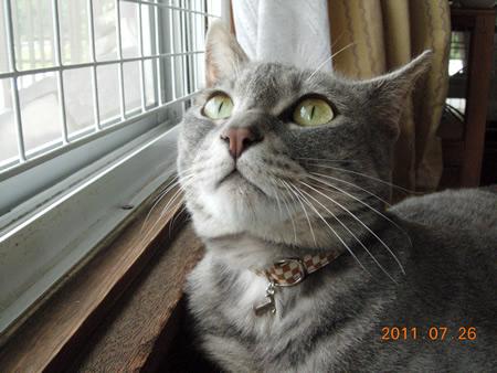 猫首輪 和風