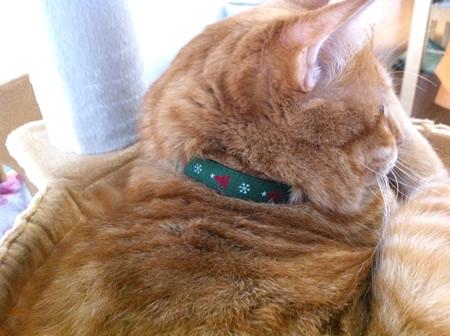 猫 首輪 クリスマス