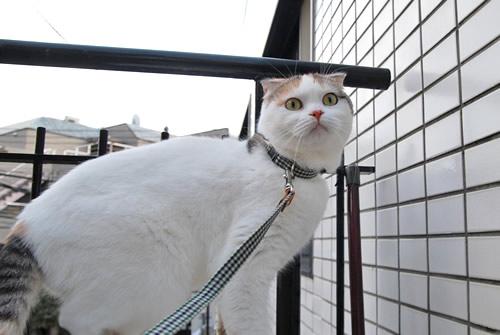 猫 リード 首輪