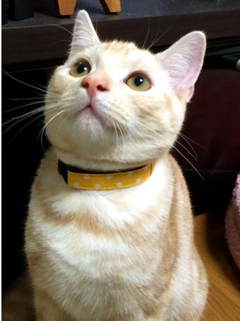 猫 首輪 お客様の声