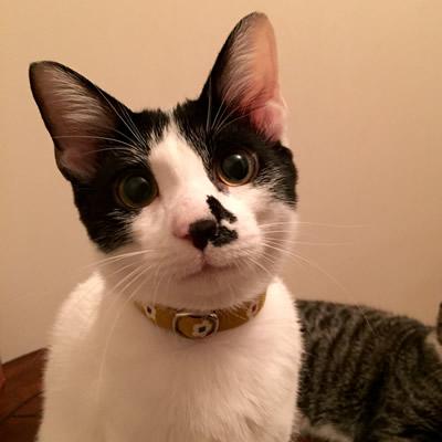 猫 首輪 お客様からの写真
