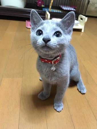 猫の首輪 おきゃく様からの写真