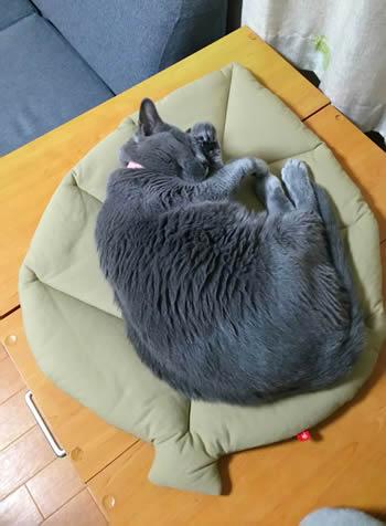 猫 お昼寝マット お客様からの写真