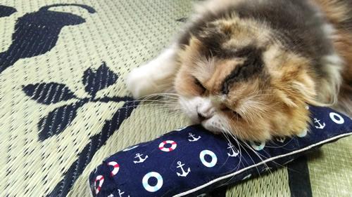 猫 おもちゃ キッカー