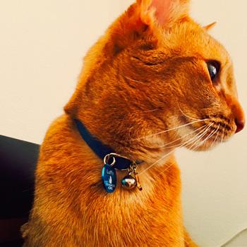 チャームと鈴をつけた首輪の猫