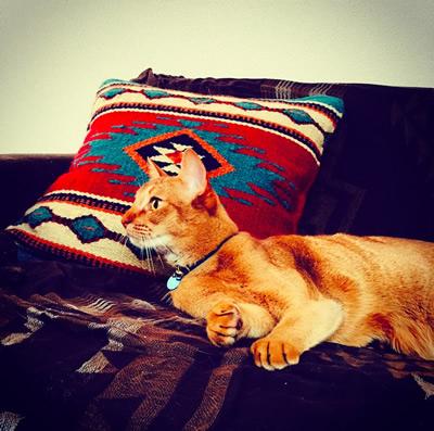 おしゃれな部屋で寝転ぶ猫