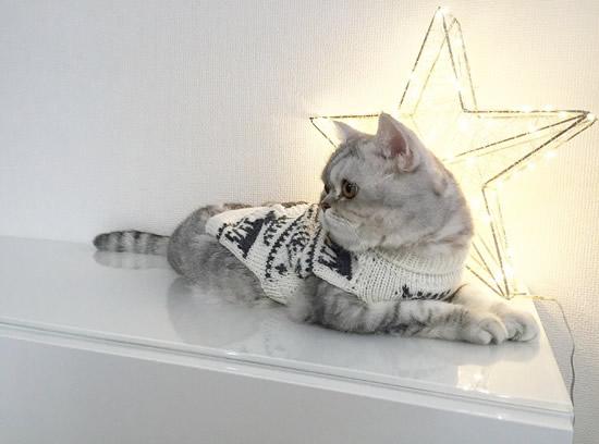 セーターを着てくつろぐ猫