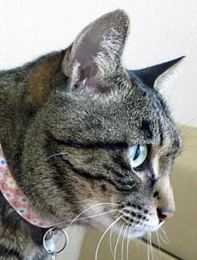 ピンクの花柄首輪をつけた猫