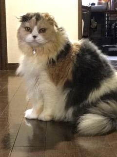 鈴付きの首輪をつけた長毛の猫さん