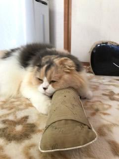 茶色のキッカーで眠る猫