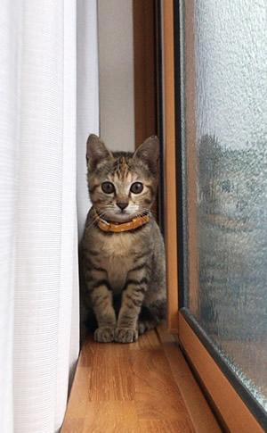 黄色いドットの子猫用首輪をつける子猫