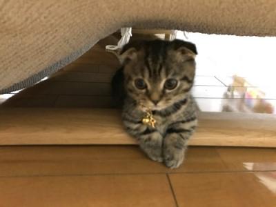 チャームの首輪をつけた子猫