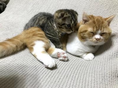 首輪をつけた子猫と先住猫