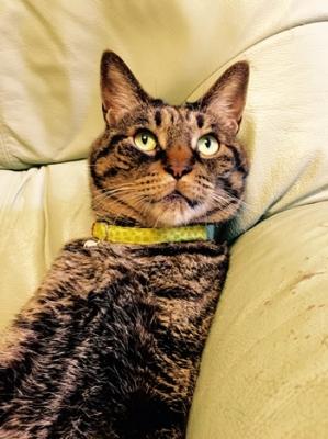 花柄の黄色の首輪をした猫ちゃん
