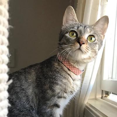 ピンクの和風の首輪をつけた猫ちゃん