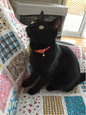 赤いハート柄の猫の首輪をした黒猫さん