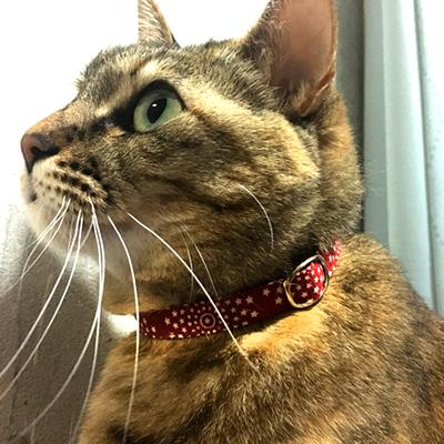 赤い猫の首輪をしているキジトラ猫