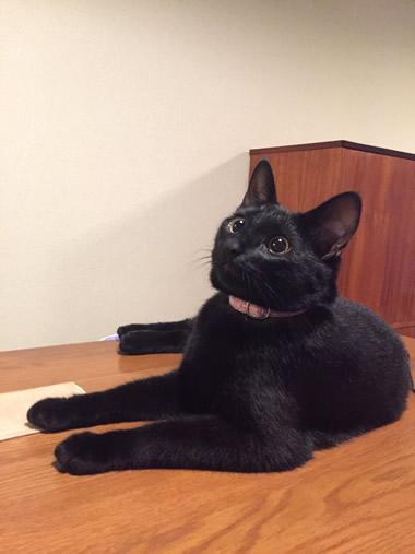 ピンクの首輪の黒猫さん