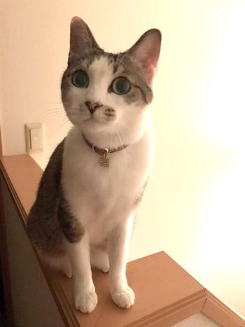 赤いタータンチェックの首輪をする猫