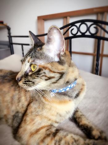 青い花柄の首輪をした猫