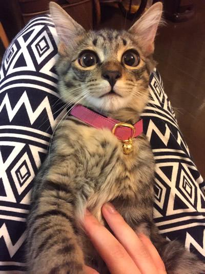 子猫の安全首輪