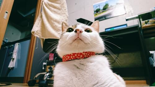 オレンジ色の首輪をした猫