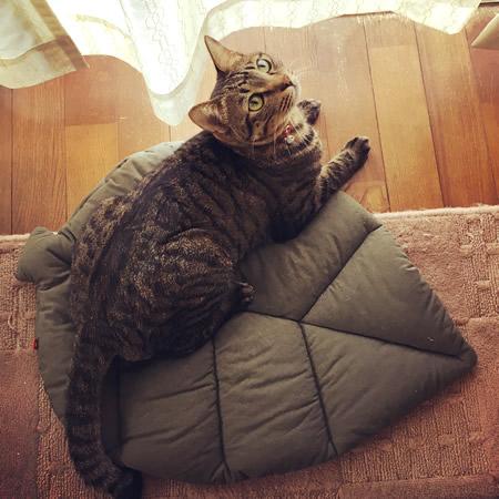 猫用お昼寝マットに寝転ぶ猫