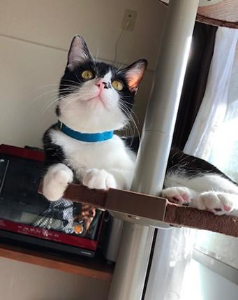 青い首輪をした猫