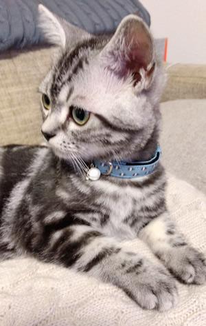 水色の子猫用首輪をした子猫