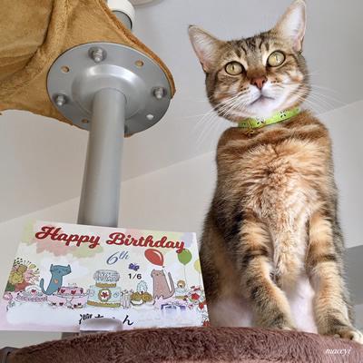お誕生日のプレゼントに黄緑色の首輪をもらった猫