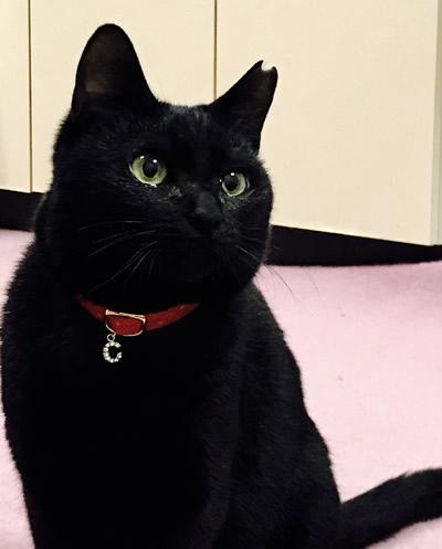 赤い首輪をした黒猫