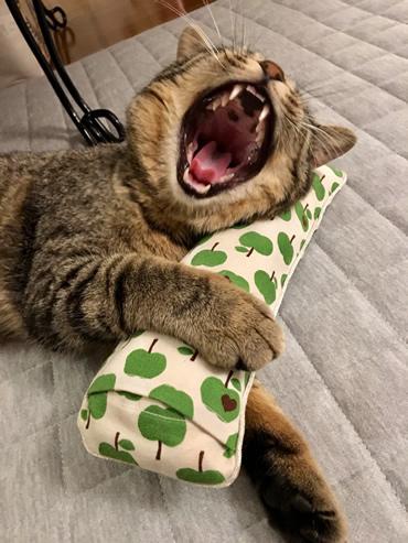 キャットニップのキッカーで遊ぶ猫