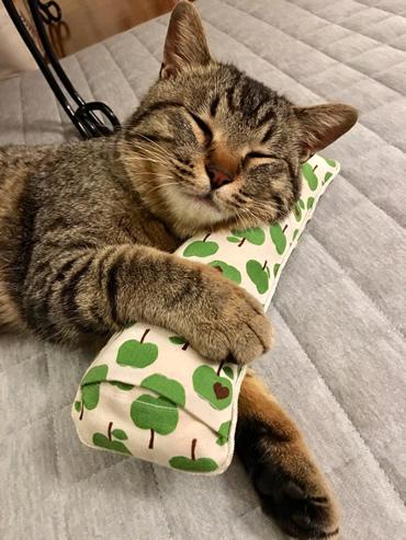 キャットニップのキッカーを枕に眠る猫