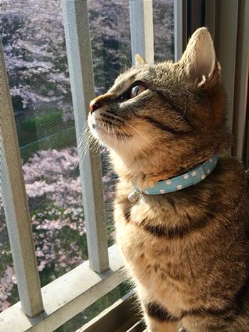 水色の首輪をした子猫