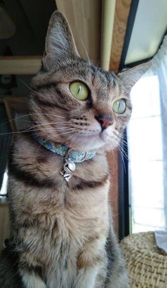 花柄の首輪をした猫