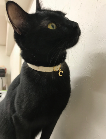 白い星柄の首輪をした黒猫