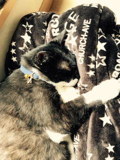 和風な首輪をして昼寝する猫