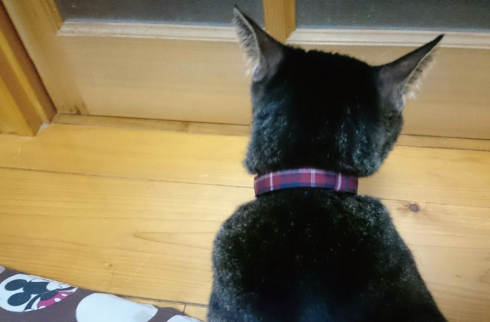 赤いタータンチェックの首輪をした黒猫