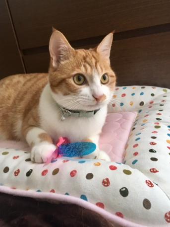 パステルカーラーの水玉柄首輪をした猫