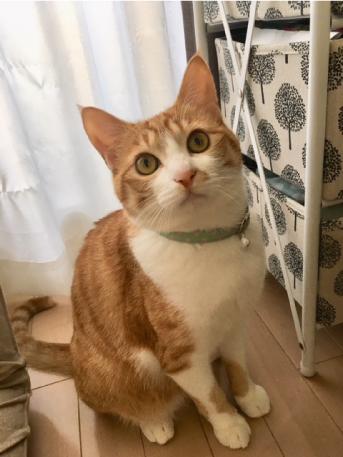 セーフティカラーをした猫