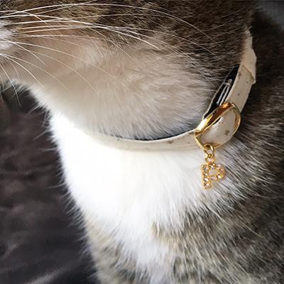 白いおしゃれな猫用首輪