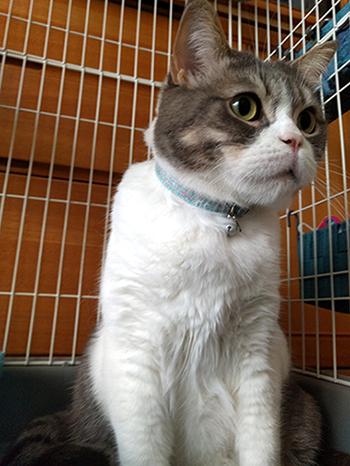 パステルカラーのセーフティ首輪をした猫