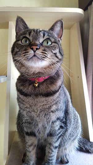 ピンクの安全首輪をした猫